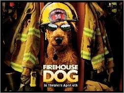 strażak, Firehouse Dog, pies